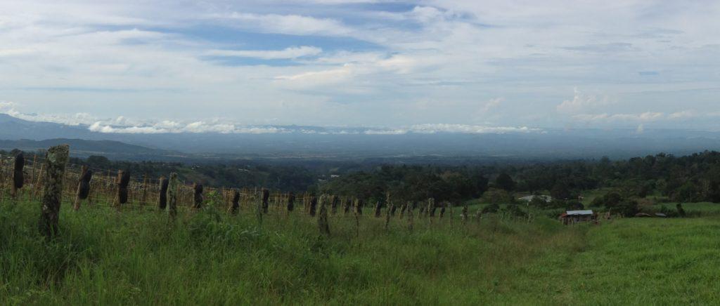 paisaje de los mameyes